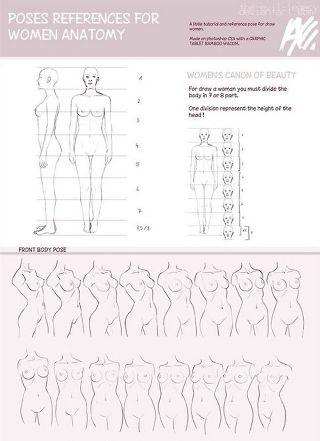 Female Anatomy Wiki Art Amino