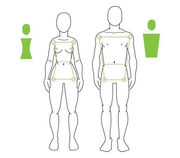 Human Anatomy Fundamentals Advanced Body Proportions Art Amino